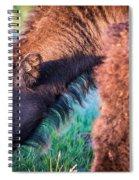 Buffalo Family Spiral Notebook