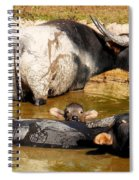 Water Buffalo Family Portrait Spiral Notebook