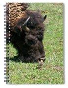 Buffalo Grazing Spiral Notebook