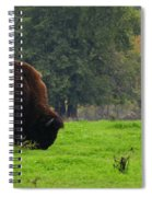 Buffalo In Spring Grass Spiral Notebook