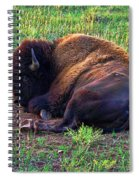 Buffalo In The Badlands Spiral Notebook