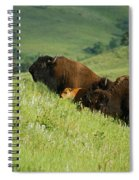 Buffalo On Hillside Spiral Notebook