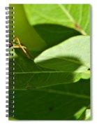 Bug Eyes Spiral Notebook
