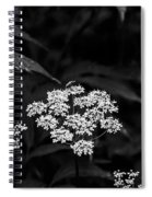 Bug On Flowers Black And White Spiral Notebook