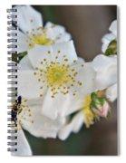 Bugaboo Apple Blossoms Spiral Notebook