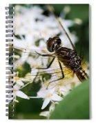 Bugs Spiral Notebook