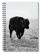 Bull After Ice Storm Spiral Notebook
