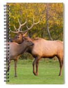 Bull And Cow Elk - Rutting Season Spiral Notebook