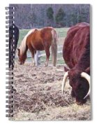 Bull And Horses, Mt. Vernon Spiral Notebook