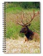 Bull Elk At Rest Spiral Notebook
