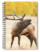 Bull Elk Bugling In The Fall Spiral Notebook