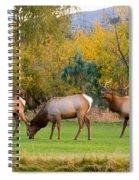 Bull Elk  Bugling With Cow Elks - Rutting Season Spiral Notebook