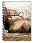 Bull Elk Calls Out Spiral Notebook
