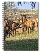 Bull Elk In Point Spiral Notebook