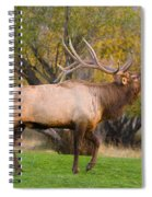 Bull Elk In Rutting Season Spiral Notebook