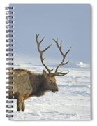 Bull Elk In Snow Spiral Notebook