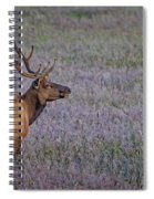 Bull Elk In Velvet Spiral Notebook