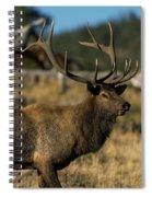 Bull Elk Profile Spiral Notebook