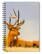 Bull Elk Resting In The Grass Spiral Notebook