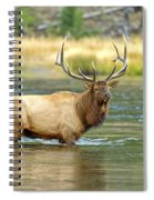 Bull Elk Wading The Madison River Spiral Notebook