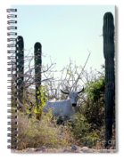Bull In The Desert Of Mexico Spiral Notebook