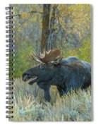 Bull Moose In The Evening Spiral Notebook