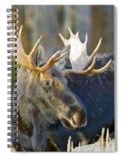 Bull Moose Up Close Spiral Notebook