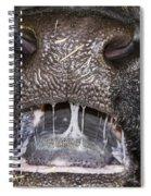 Bull Nose Spiral Notebook