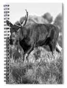 Bull On A Blue Sky Day Black And White Spiral Notebook