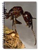 Bullet Ant Spiral Notebook