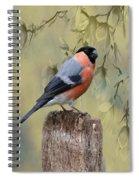 Bullfinch Bird Spiral Notebook