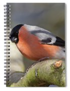 Bullfinch Spiral Notebook