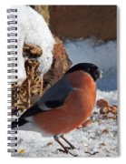 Bullfinch In The Snow Spiral Notebook