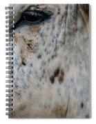 Bullseye Spiral Notebook