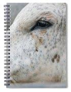 Bullseye2 Spiral Notebook