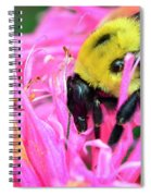 Bumble Bee And Flower Spiral Notebook