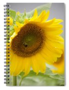 Bumble Bee And The Sunflower Spiral Notebook