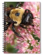 Bumble Bee Macro Spiral Notebook