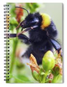 Bumble Bee On Flower Spiral Notebook