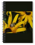 Bumble Bee Sitting On Black-eyed Susan Spiral Notebook