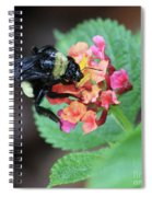 Bumble Bee Square Spiral Notebook