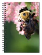 Bumble From Above Spiral Notebook