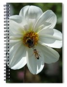 Bumblebee And Bee Spiral Notebook