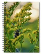Bumblebee And Canadian Goldenrod 15 Spiral Notebook