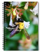 Bumblebee On Abelia Spiral Notebook