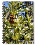 Bumblebee On Elkweed Blossoms Spiral Notebook