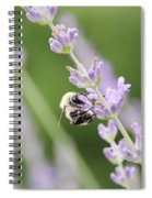 Bumblebee On The Lavender Field 2 Spiral Notebook