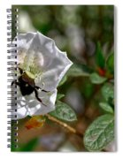 Bumblebee On White Azalea Spiral Notebook
