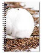 Bunnies Three Spiral Notebook