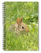 Bunny In The Grass Spiral Notebook